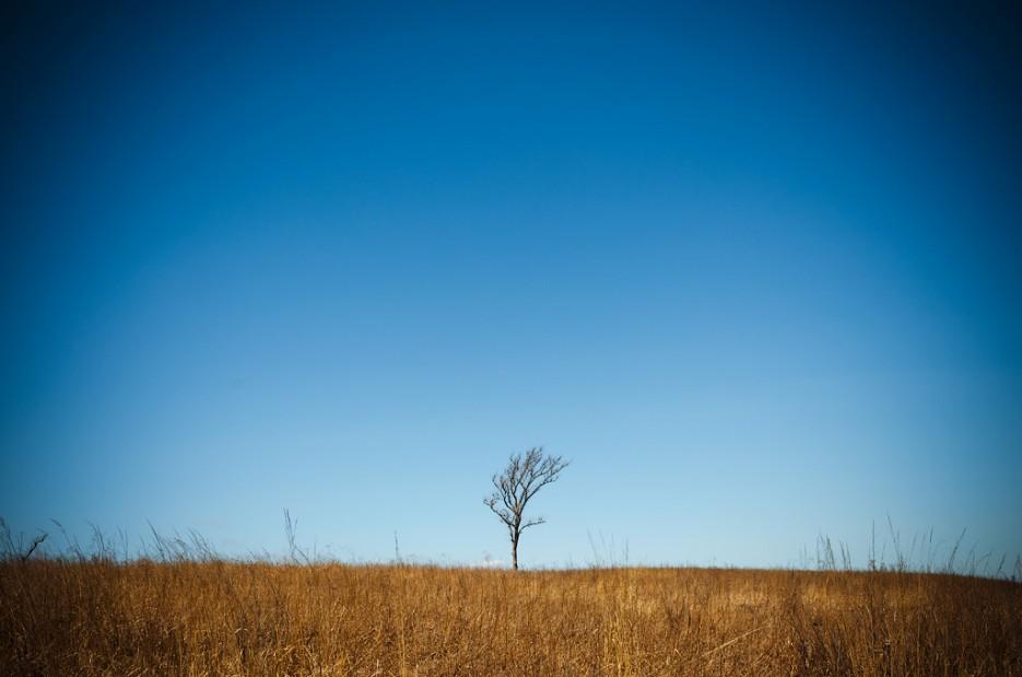 Одинокое дерево, посреди бескрайних полей. На самом верху вулкана, там где карьер Барановский.   Барановский вулкан. Надежденско-Уссурийский район.