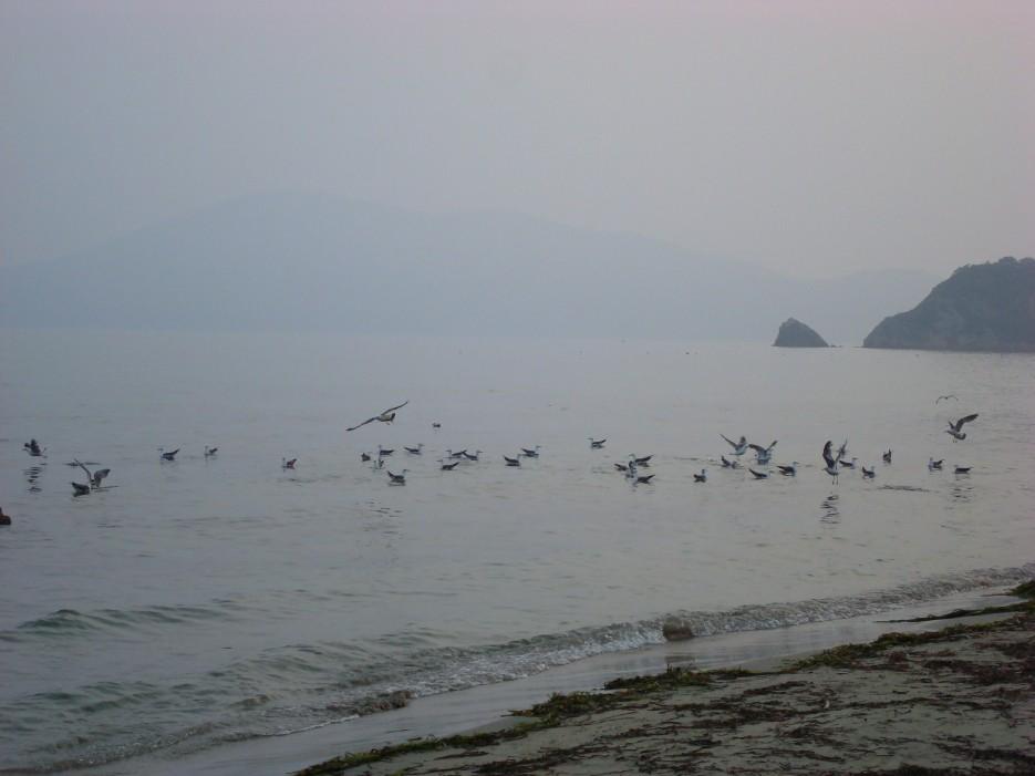 б. Тинкан   побережье Фокино-Руднево