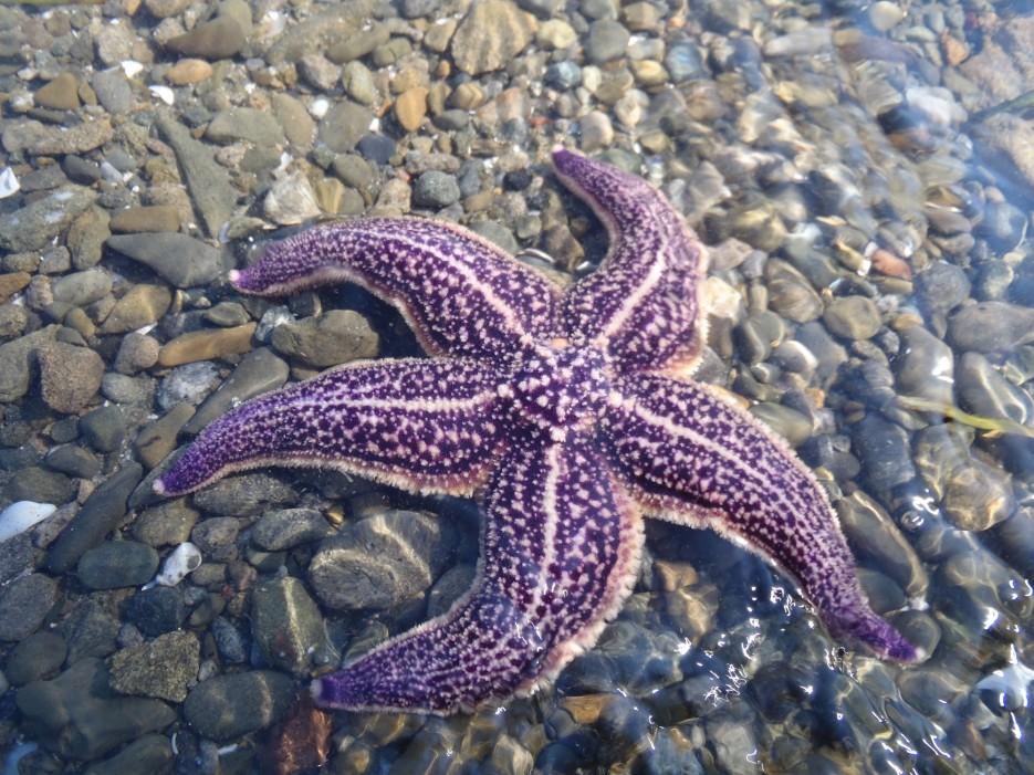 Морская звезда | Любимый край!