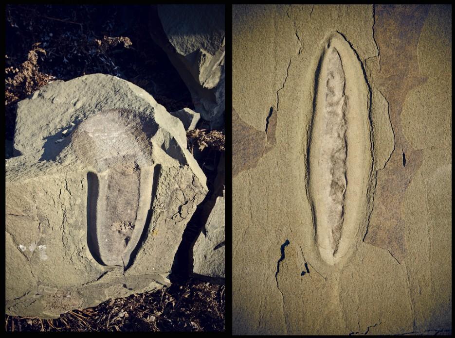 Необычные камни. Мыс Тобизина.   Полуостров Тобизина и мыс Вятлина. Юго-восточное побережье острова Русский. Весна.