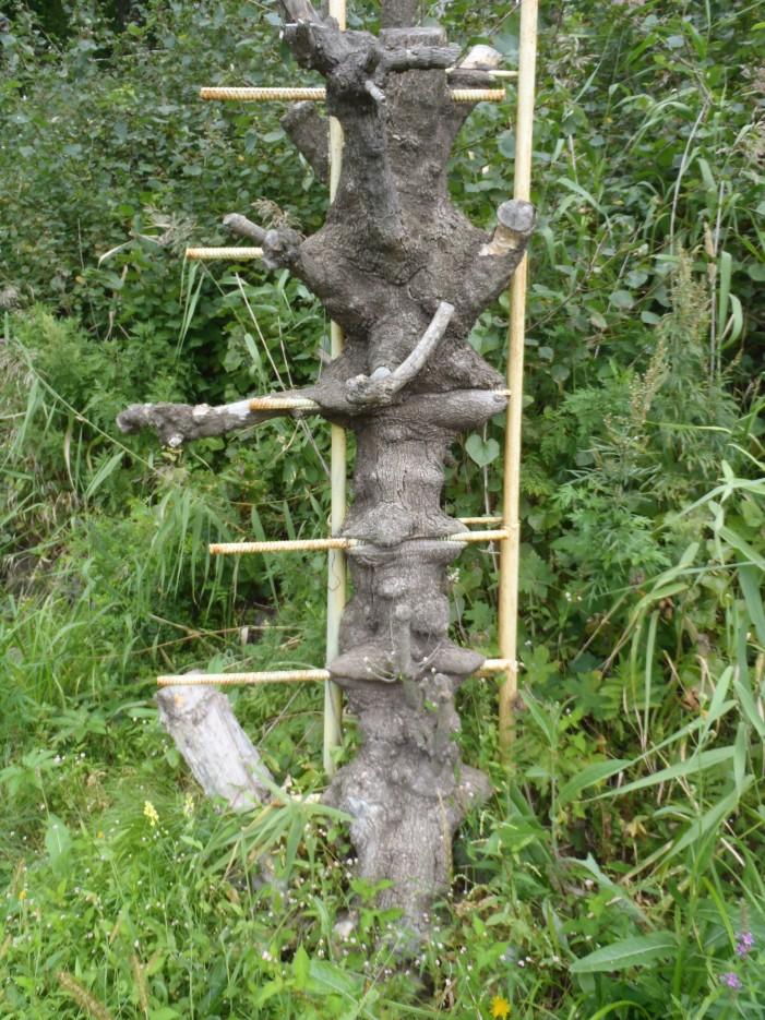 """дерево """"съело"""" лестницу :)   б. Шепалово"""