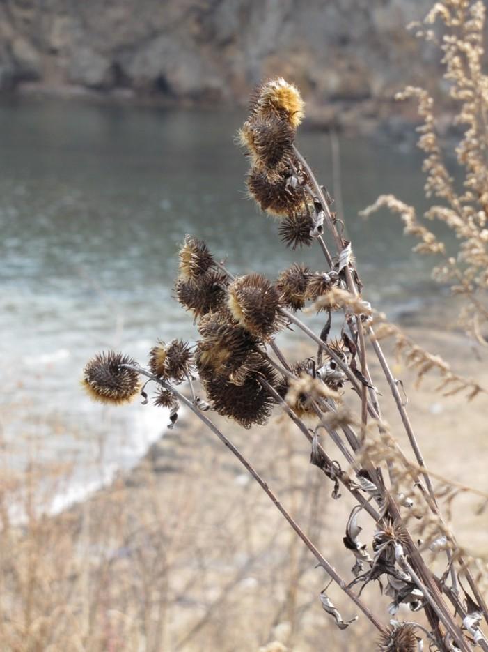 любимый цветок) | мыс Вилкова и окрестности