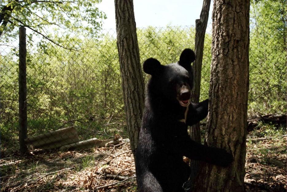 Медвежий питомник. Дубовый ключ. Уссурийск. | Дендрарий академии наук и медвежий питомник. Уссурийск.