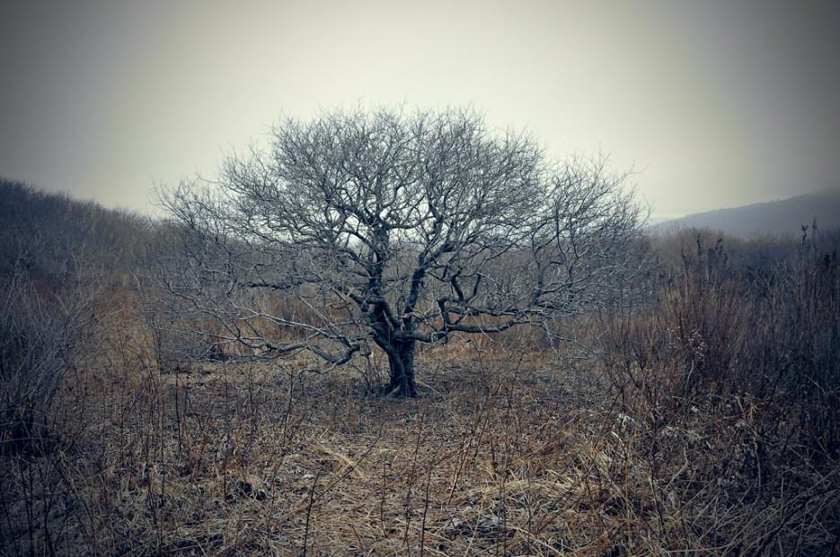 Одиночка. | Траверс от Шаморовского перевала до посёлка Емар по хребту Богатая грива (Океанский).
