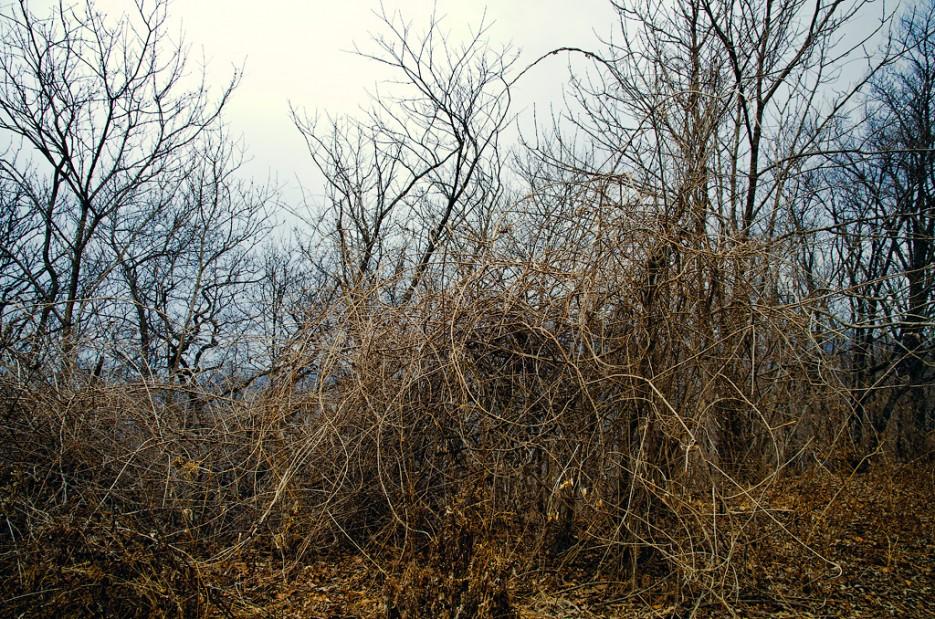 Дикие заросли. Дорога на хребет. | Траверс от Шаморовского перевала до посёлка Емар по хребту Богатая грива (Океанский).
