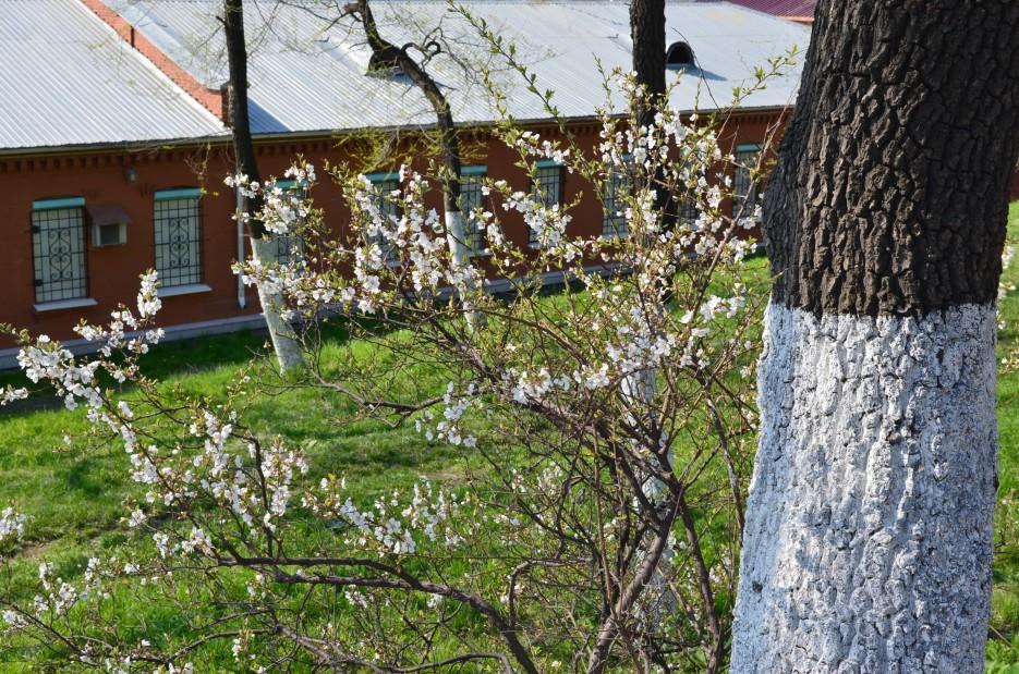 Город расцветает | Владивосток (подборка)