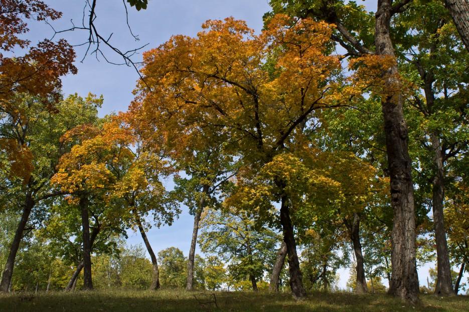 Фото 41330 | Осень