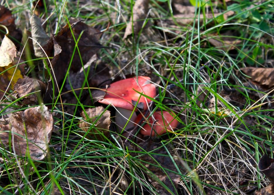 Фото 41335   Осень