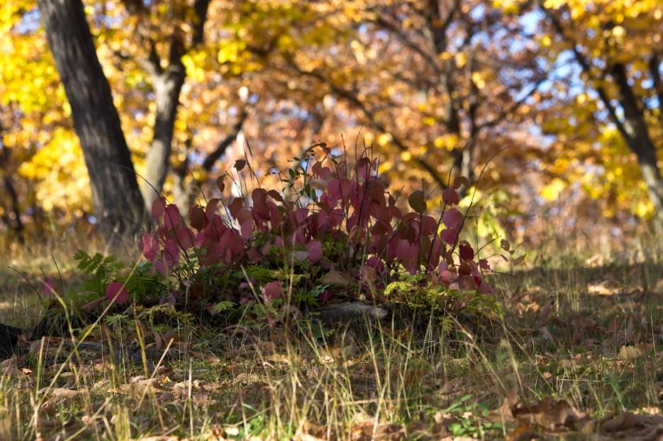 Фото 41340   Осень