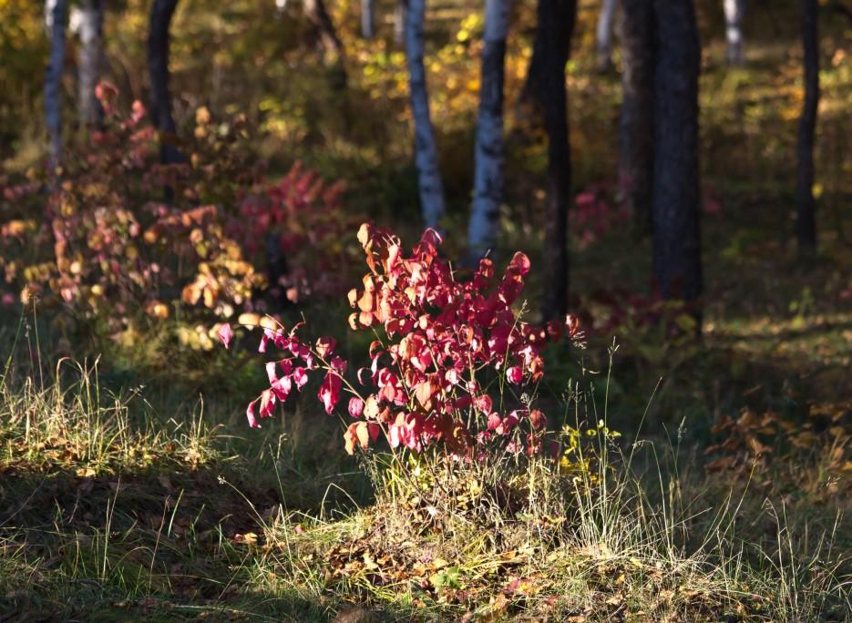Фото 41343   Осень