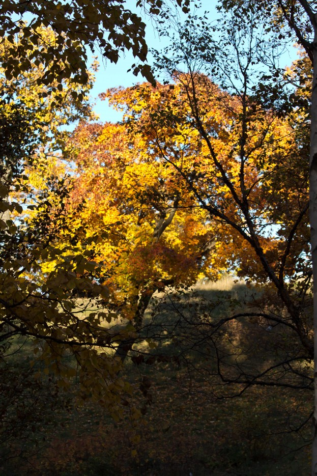Фото 41344 | Осень