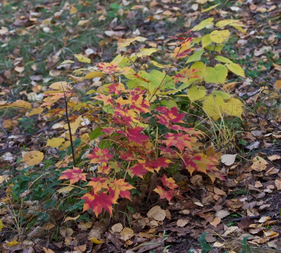 Фото 41345   Осень