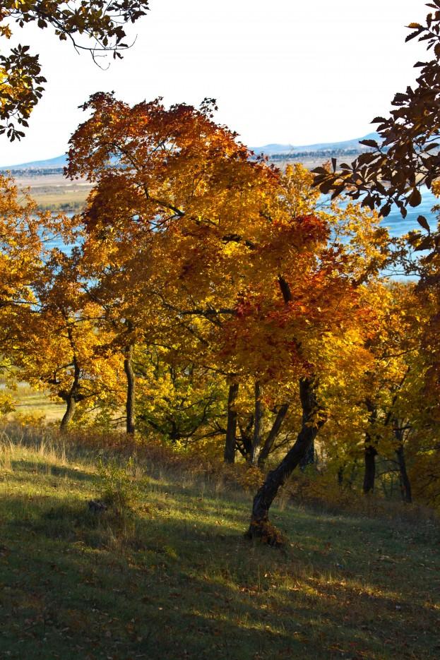 Фото 41346 | Осень