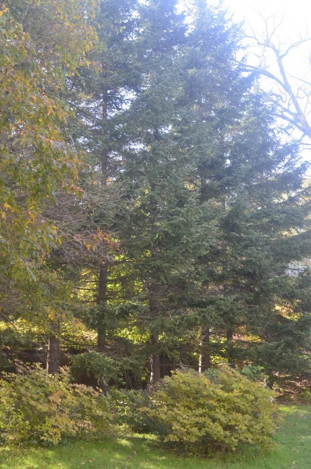 Ботанический сад, Окрестности парка | Ботанический сад, Владивосток