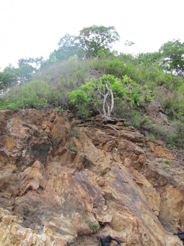 и на камнях растут деревья | пятница 13-ое ...