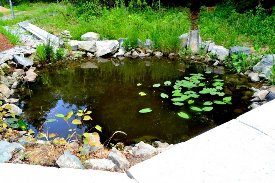 Фото 44118   Волшебство Ботанического Сада