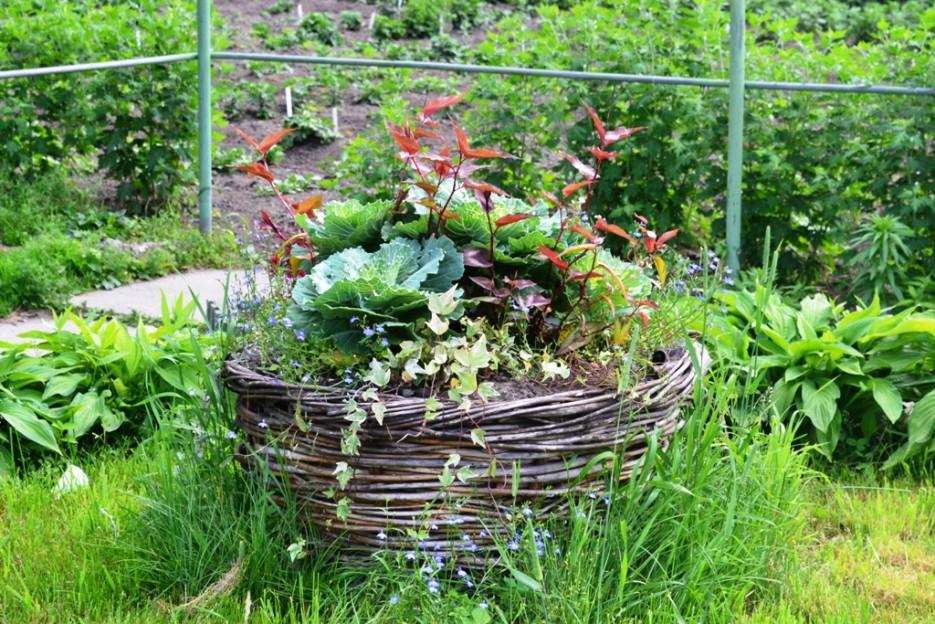 Фото 44140 | Волшебство Ботанического Сада