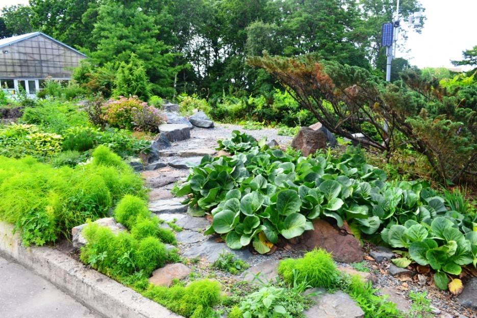 Фото 44156   Волшебство Ботанического Сада