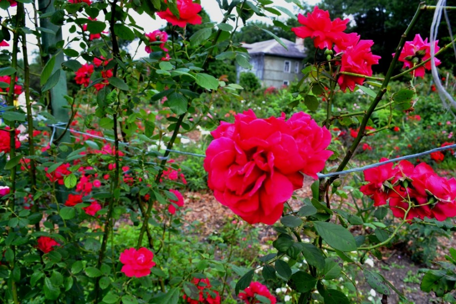 Фото 44162 | Волшебство Ботанического Сада