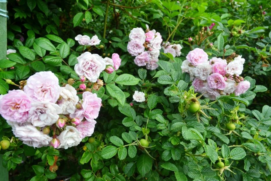 Фото 44163 | Волшебство Ботанического Сада