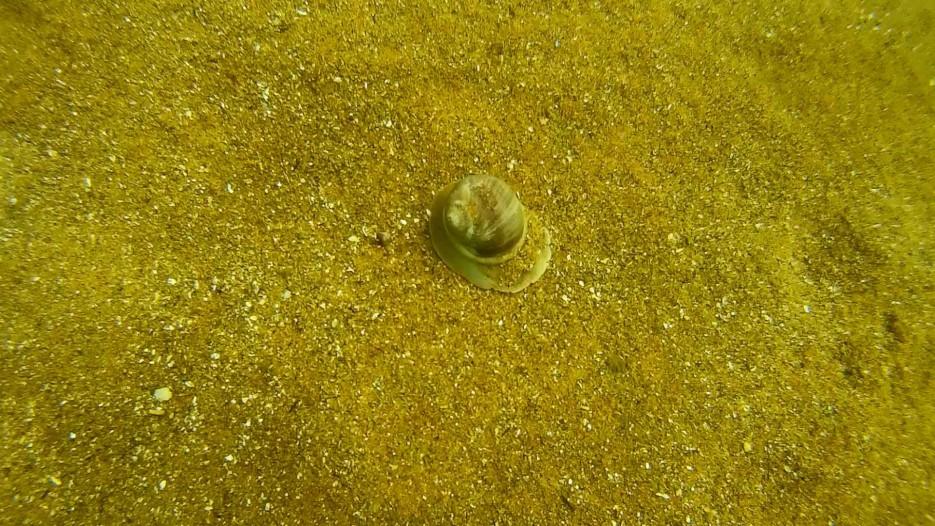 Фото 46848 | Отдых в Ливадии 2015. Пробные погружения с аквалангом