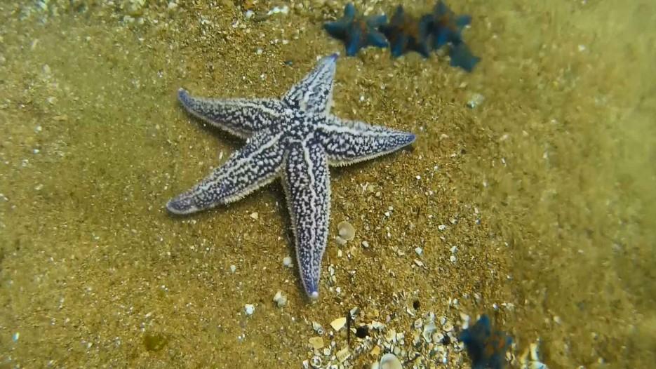 Фото 46851 | Отдых в Ливадии 2015. Пробные погружения с аквалангом