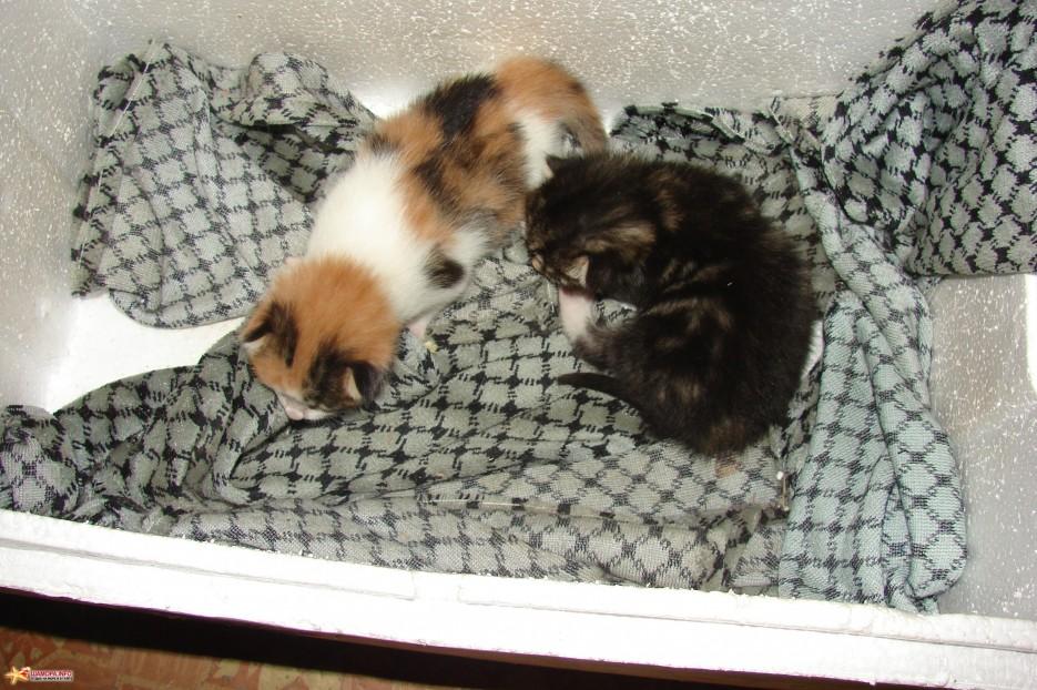 02.Котята. Такими котята были в начале мая. | Котята на базе отдыха «Бархатная Сихотэ» подросли. Июль 2011 год.