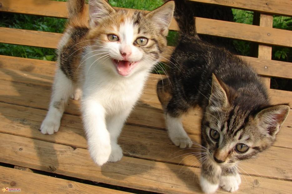 03.Подросшие котята. Такими котята стали сейчас.   Котята на базе отдыха «Бархатная Сихотэ» подросли. Июль 2011 год.