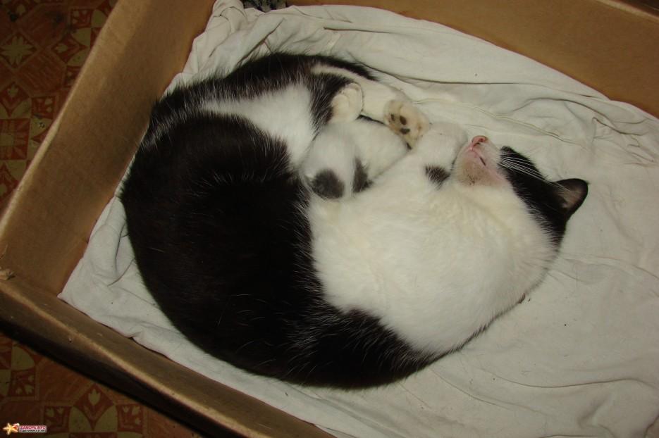 14.Кошка «Бося» с малышом.   Котята на базе отдыха «Бархатная Сихотэ» подросли. Июль 2011 год.