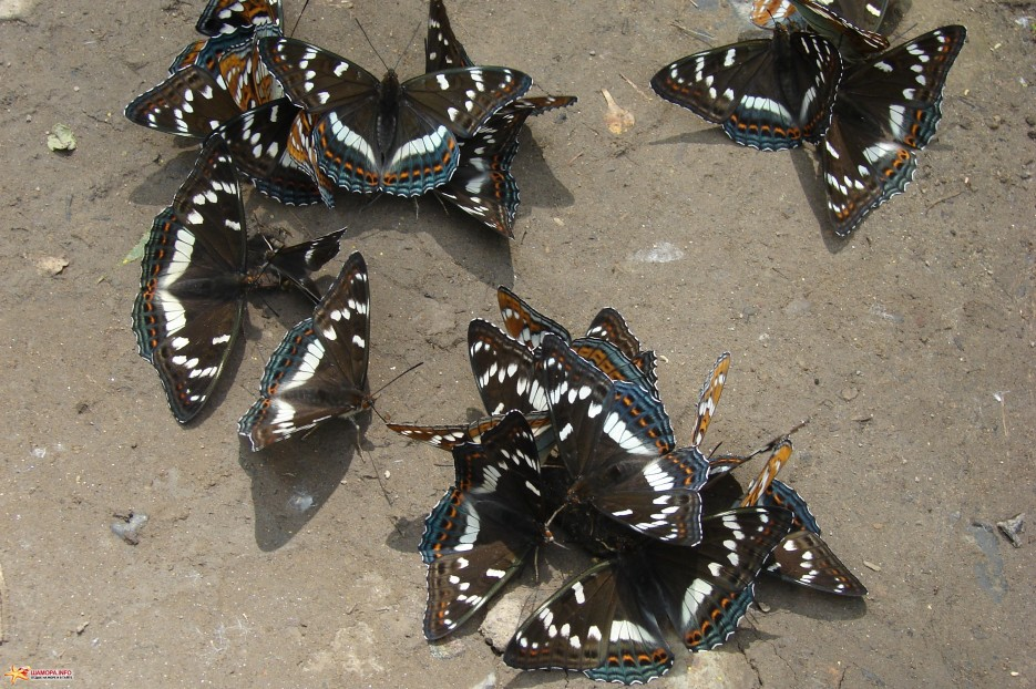 10.Бабочки. | Лето на базе отдыха «Бархатная Сихотэ». Август 2011 года.