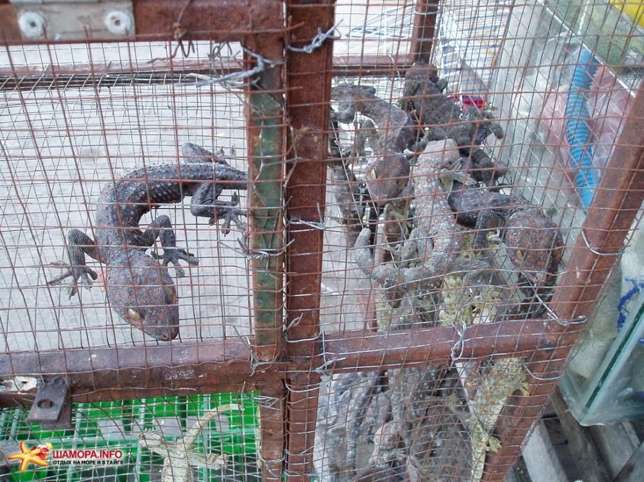 ящерки это уже взросленькие, те что поменьше бегают повсюду — предпочитают побеленные потолки   Вьетнам. Ня Чанг.