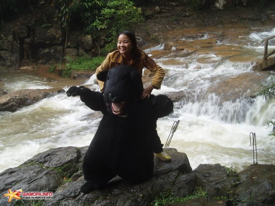 медвед и вьетнамка | Вьетнам. Далат.