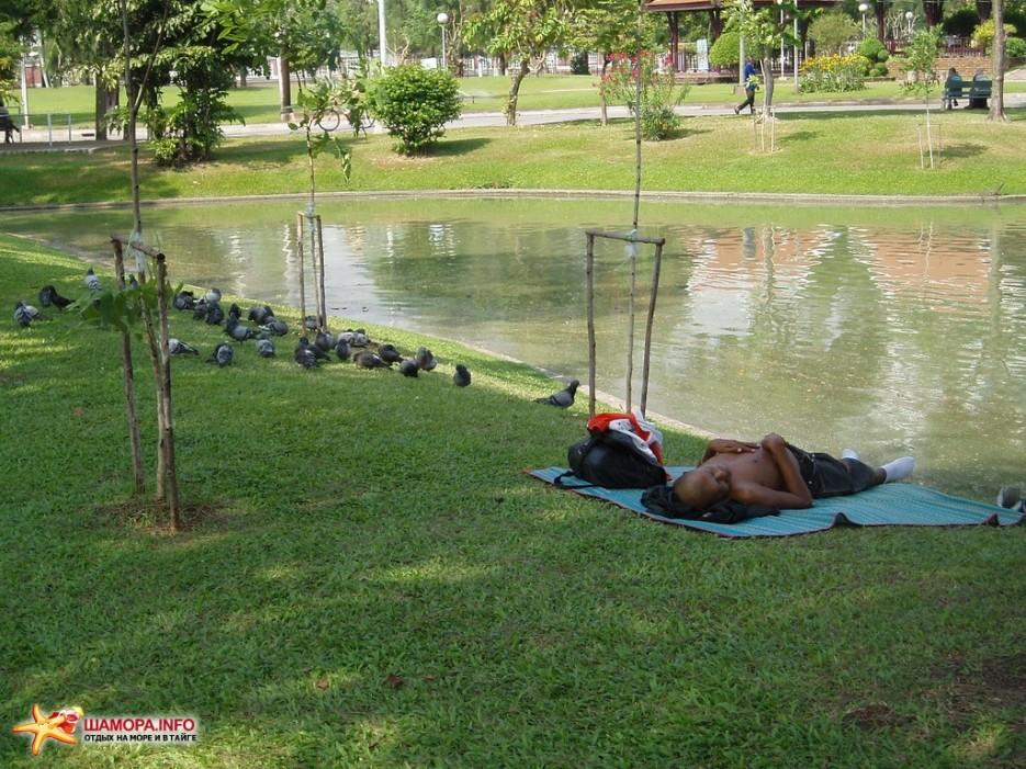 здоровый послезавтрачный сон | Тайланд. Бангкок.