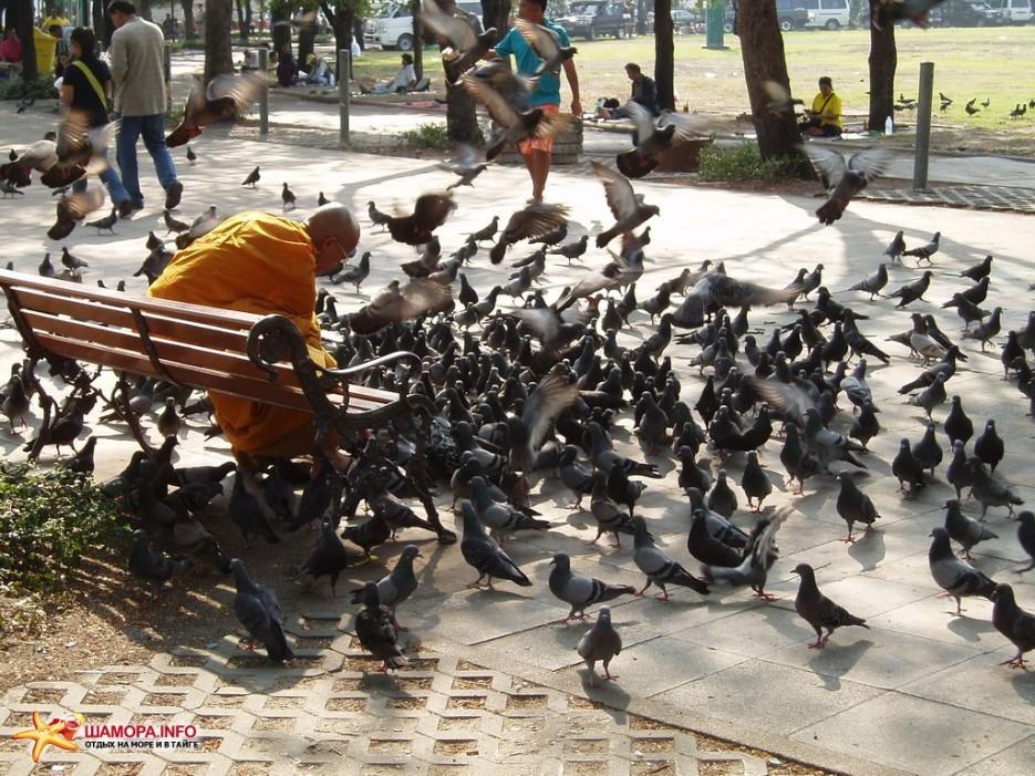 монах и голуби | Тайланд. Бангкок.