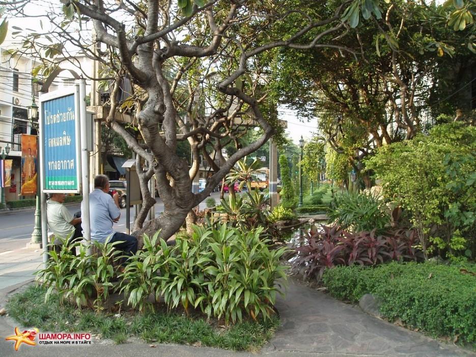 растительность   Тайланд. Бангкок.