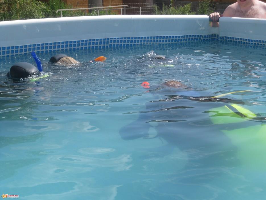 Фото 8423 | База отдыха «ГАИТИ» и Дайв-Центр «Nautilius» приглашет всех желающих пройти обучение подводному плаванию!