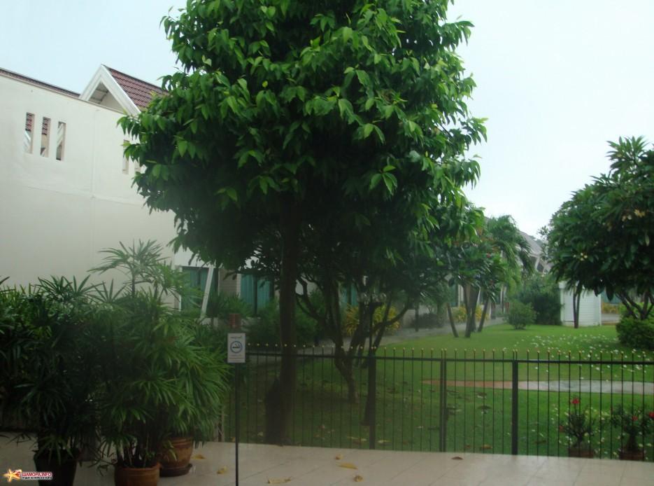 окрестности гостиницы | ТАИЛАНД-(Паттайя, Бангкок)-2011, Сентябрь