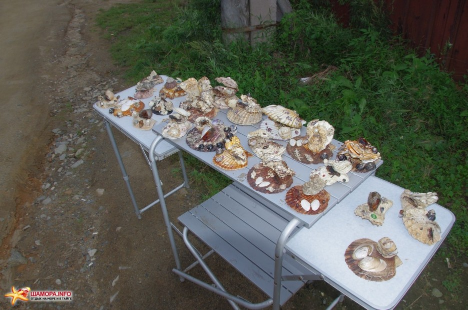 артефакты для хабаровчан | 1я неделя сентября на тб «Рифовая» Ливадия