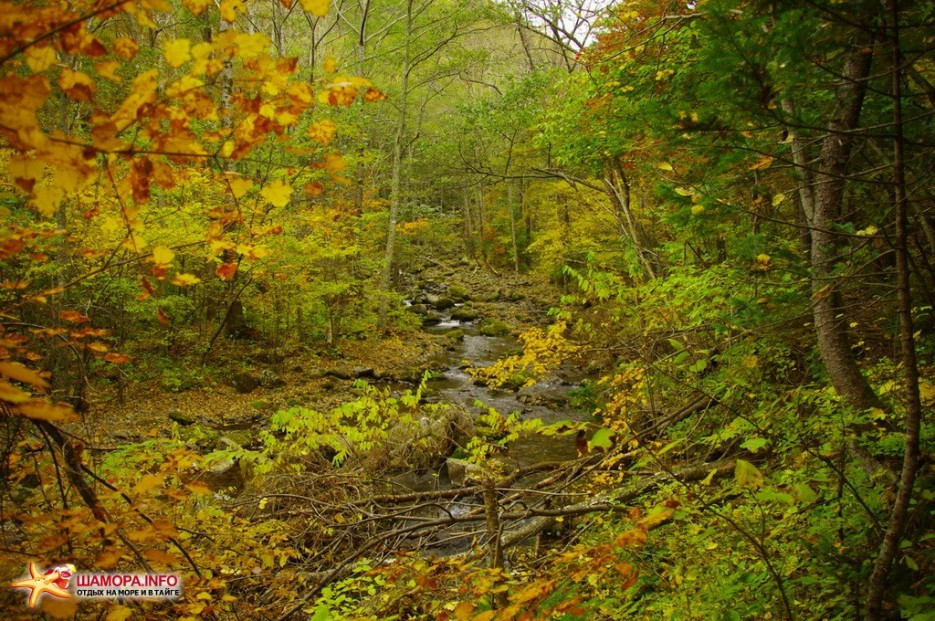 Фото 9934 | Осень и Девушка