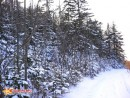 молодой ельник-примета близкой вершины этих гор. дорога идёт дальше, а нам на вершину уже по колено в снегу.