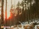 солнце в горах садиться стремительно и мы несёмся вниз по умирающему хвойному склону. через скокато лет деревья сгниют на корню, волоками нарушен дёрн, по которому поступало питание, да и сами корни тоже пострадали.