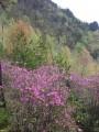 Феерия весенних красок