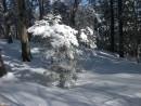 Заснеженный лес на хребте