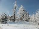 Оснеженные деревья Все деревья выше уровня леса покрыты замерзшим снегом