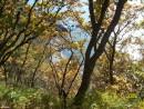 Золотая осень в Андреевке.