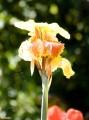 Какойто цветок 01