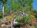 Природа приморского края