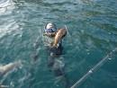 А это Леха с бурым (восьмилинейным) терпугом, который в народе еще называют ленком. Эти рыбки вырастают довольно крупными...