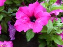 цветок центр г.Находка, клумба 15.08.2007