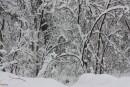 Пидан Сихотэ, снегопад 7 марта